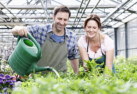 Germany, Bavaria, Munich, Mature man and woman watering rocket plant in greenhouse - RREF000013