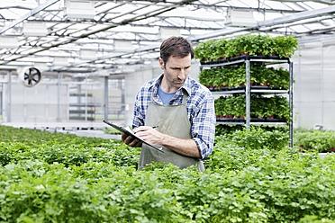 Germany, Bavaria, Munich, Mature man examining parsley plants in greenhouse - RREF000025