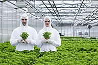 Germany, Bavaria, Munich, Scientists in greenhouse with parsley plant - RREF000031