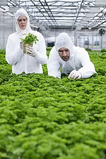 Germany, Bavaria, Munich, Scientists in greenhouse examining parsley plant - RREF000032