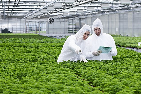 Germany, Bavaria, Munich, Scientists in greenhouse examining parsley plant - RREF000035