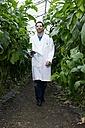 Germany, Bavaria, Munich, Scientist in greenhouse walking between aubergine plants - RREF000051