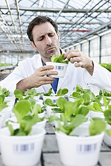 Germany, Bavaria, Munich, Scientist in greenhouse examining corn salad plants - RREF000056