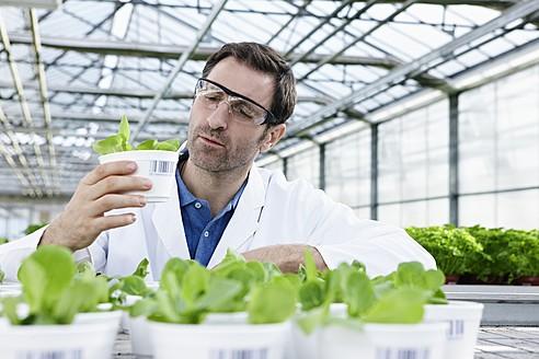 Germany, Bavaria, Munich, Scientist in greenhouse examining corn salad plants - RREF000058