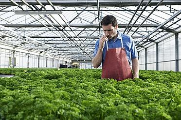 Germany, Bavaria, Munich, Mature man in greenhouse between parsley plants - RREF000063