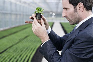 Germany, Bavaria, Munich, Mature man in greenhouse with corn salad - RREF000075