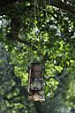 Germany, Baden Wuerttemberg, Old rusty lantern hanging on tree - AXF000313