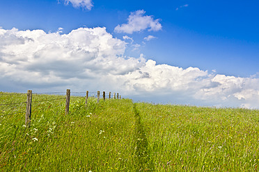 Germany, Grassland in summer - CPF000005
