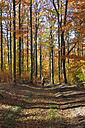 Germany, Saxony, Mature woman walking in beech forest - JTF000165