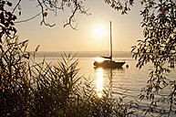 Germany, Bavaria, Sailing boat on Lake Ammersee, reed in foreground - UMF000521