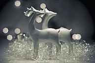 Christmas decoration with deer, close up - MJF000165