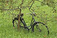 Austria, Upper Austria, Historical bike leaning at tree - SIEF003014