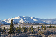 USA, Alaska, View of Denali National Park - FOF004490