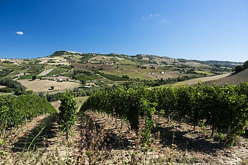 Italy, View of vineyard - KA000047