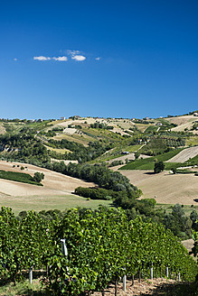 Italy, View of vineyard - KAF000044