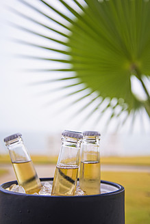 USA, Texas, Beer bottles in ice bucket in front of palm tree leaf - ABAF000585
