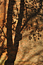 Germany, Bavaria, Shadow of tree on bricks wall - AXF000423