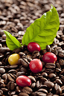 Fresh and roasted coffee beans with leaf, close up - CSF016245