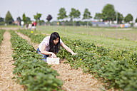 Germany, Bavaria, Young Japanese woman picking fresh strawberries in strawberry field - FLF000198