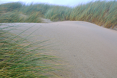 Netherlands, Ouddorp,  Dune with beach grass - MHF000104