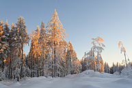 Germany, View of Black Forest in winter - JOKF000005