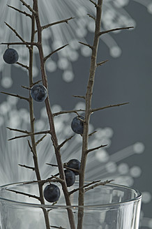 Blackthorn in glass with fibre optic in background in background, close up - ASF004790