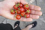 Germany, Human hand gardening tomatoes - NDF000335