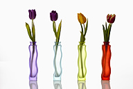 Variety of flower vases with tulips on white background, close up - CSF016545