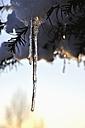 Germany, Bavaria, Icicles melting - AXF000426