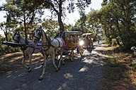 Turkey, Istanbul, Tourist travelling by horse-drawn carriages at Buyukada - SIE003322