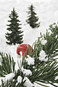 Santa hat behind fir twig with snow - ASF004828