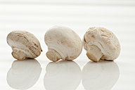 Row of mushrooms on white background, close up - CSF016731