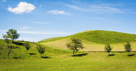 Austria, Landscape of small trees against blue sky at Mondsee - WVF000314