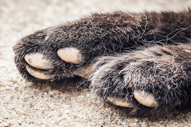 Austria, Close up of old cats paw - WVF000317
