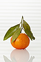 Fresh clementine on white background, close up - CSF016795