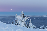 Germany, Bavaria, Moonrise on summit of mountain at Bavarian Forest - FO004864