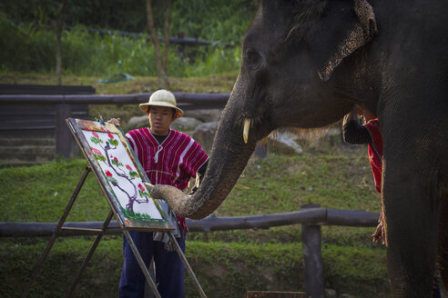 Thailand, Chiang Mai, Elephant painting picture with trunk - MBE000564