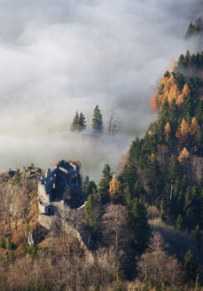 Austria, Salzkammergut, Castle ruin Wartenfels and trees covered with fog - WW002700