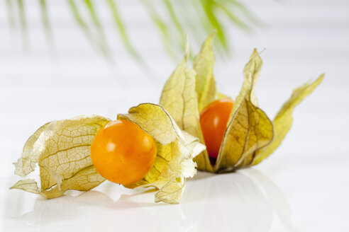 Physalis on white background, close up - CSF017441