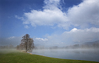 Austria, View of trees in morning fog at Mondsee Lake - WWF002756