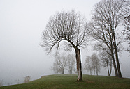 Austria, View of trees in morning fog at Mondsee - WW002765