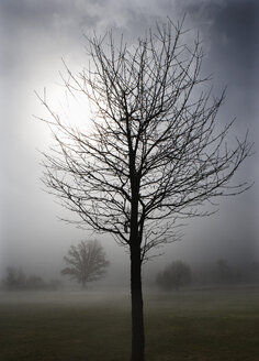 Austria, View of trees in morning fog at Mondsee - WW002770