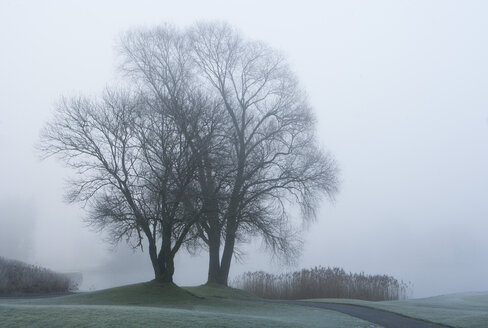Austria, View of trees with reed in morning fog at Mondsee Lake - WWF002771