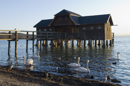 Germany, Bavaria, Swans and ducks floating on Ammersee by boathouse - CRF002324