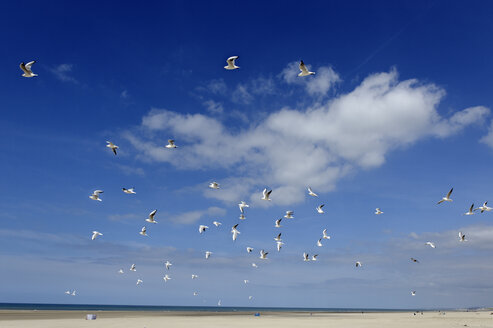 France, Berck, View of birds flying in sky - LBF000012