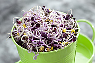 Radish sprouts in container, close up - CSF018099