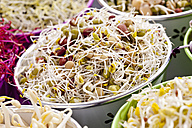 Mixed sprouts in container, close up - CSF018132