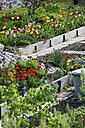 Germany, Wuerzburg, Flowers in garden - ND000364