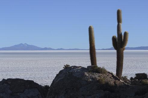 Bolivia, View of Salar de Uyuni and Isla del Pescado - RM000525