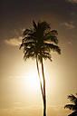 USA, Hawaii, View of palm trees against sky - SKF001258
